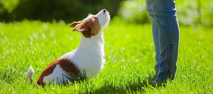 training pet